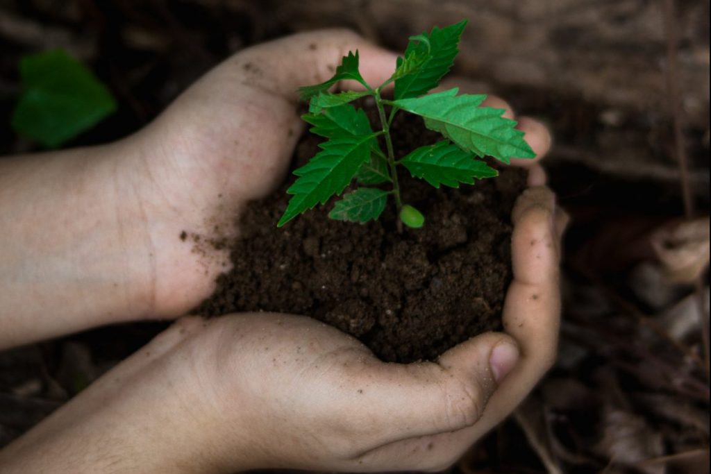Starting Today, These Breweries Are Giving Away Free Baby Trees In Honor of Earth Day