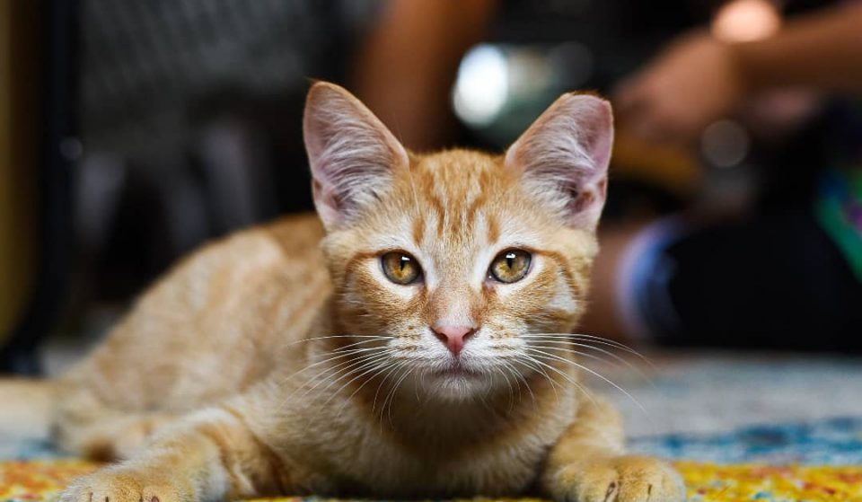 Charlotte's Premiere Cat Cafe Is The Purrfect Way To Spend An Afternoon Year-Round