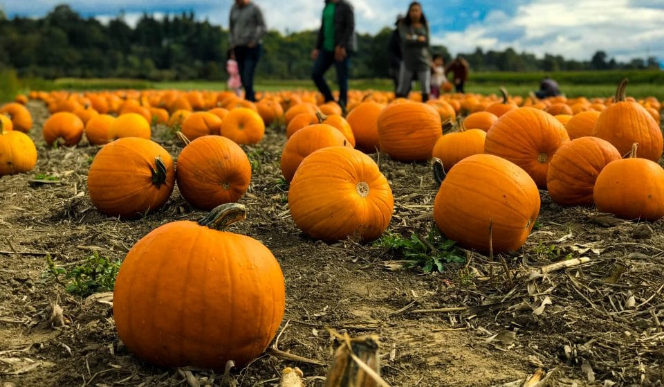 13 Farms & Orchards With Corn Mazes, Pumpkin Patches, & All The Fall Things In North Carolina