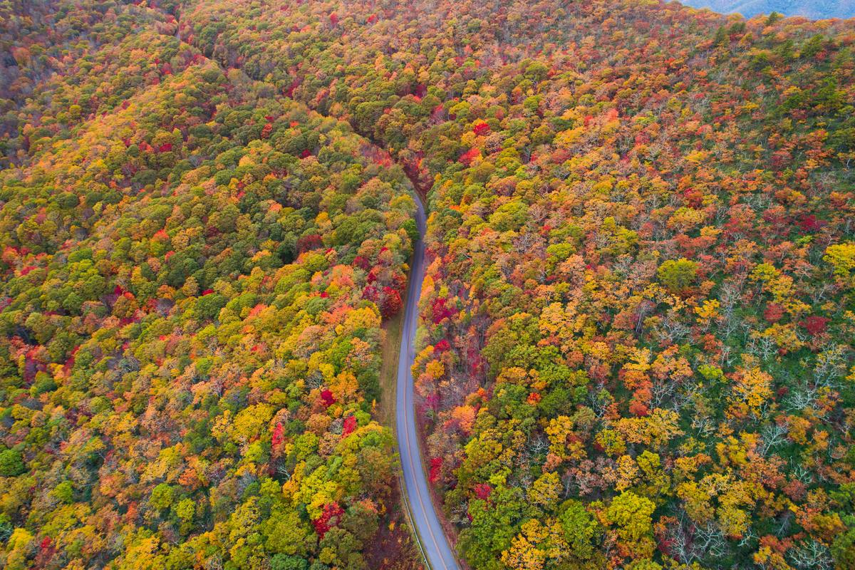 [PHOTOS] 15 Breathtaking Photos Of The Fall Foliage In North Carolina, Shot By Locals